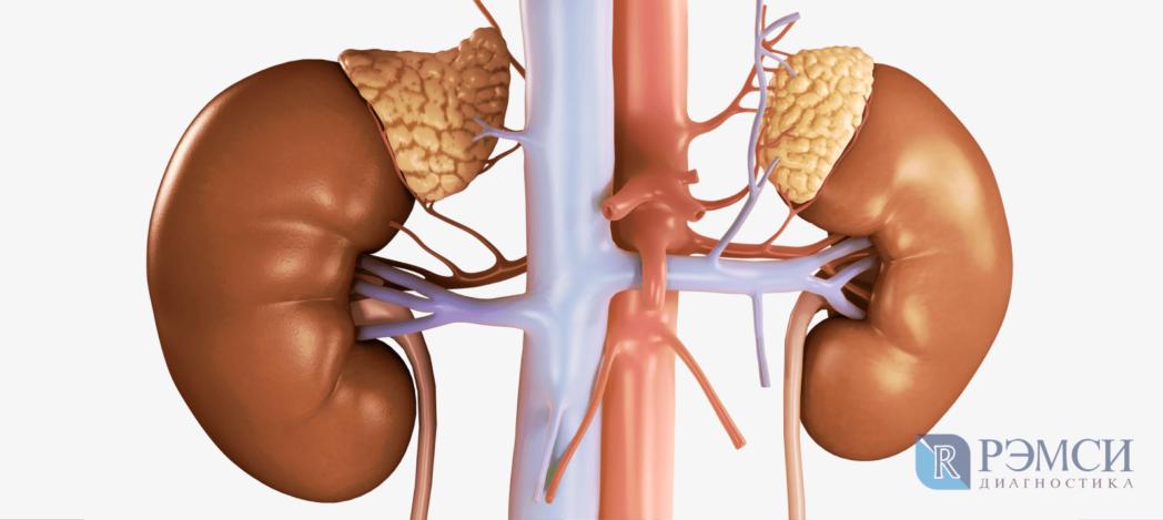 Диагностика надпочечников: роль надпочечников в организме